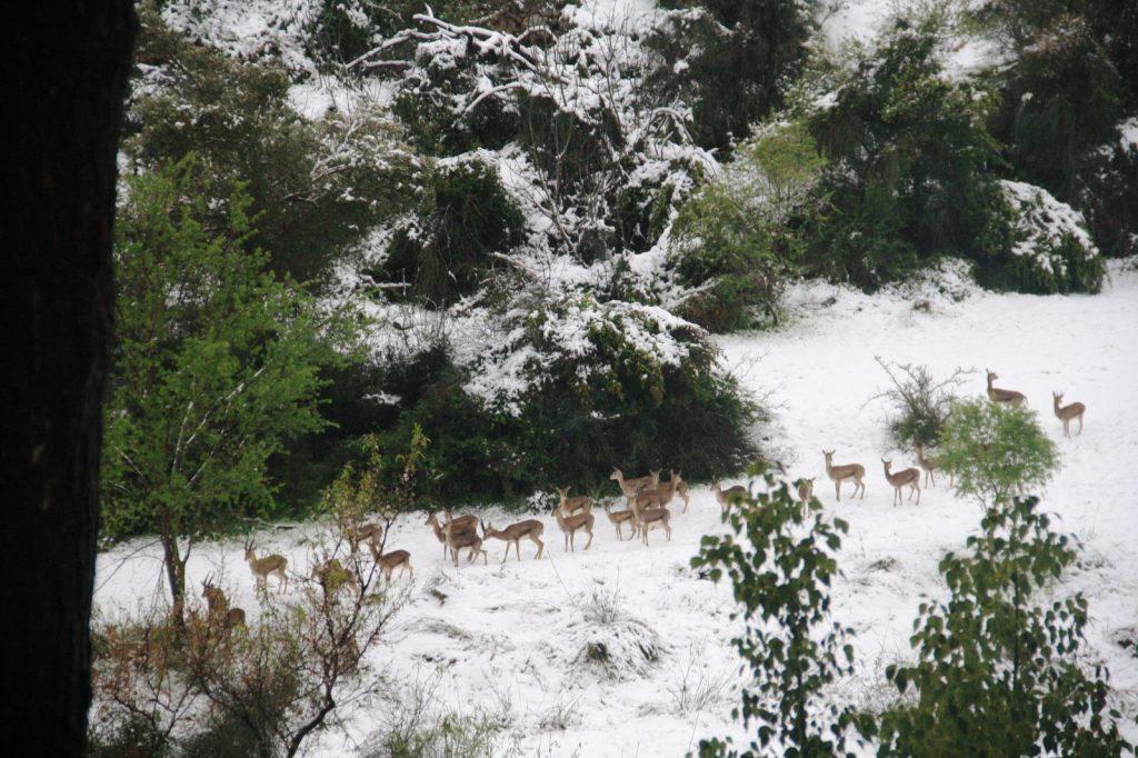 תיעודים מרהיבים מהשלג בירושלים: עמק הצבאים, ונחל שורק