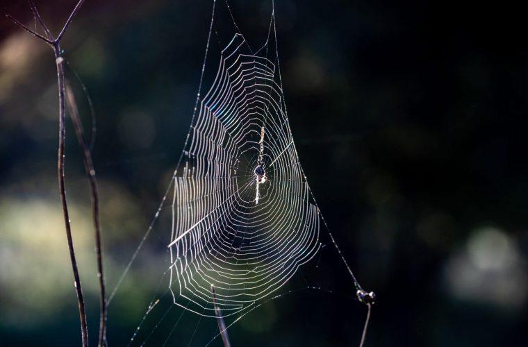 קורי עכביש // צילום: דורון הורוביץ / פלאש 90