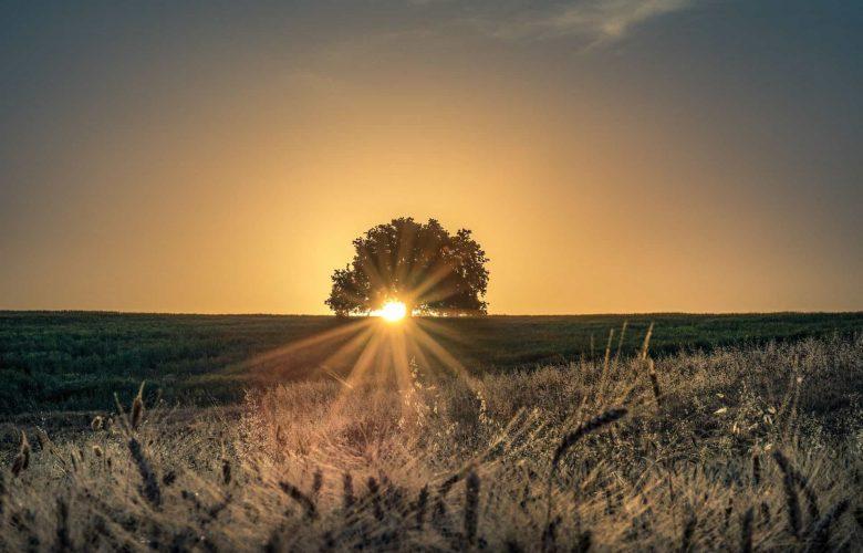 שמש צילום: מילה אביב / Flash90