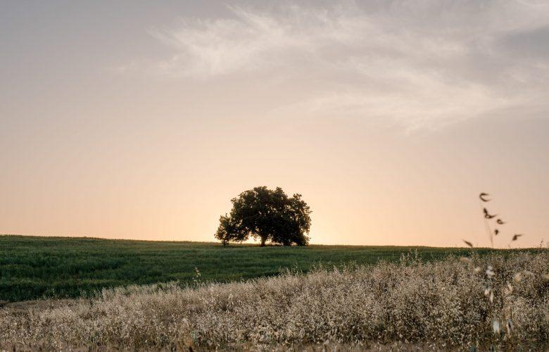 צילום: מילה אביב פלאש 90
