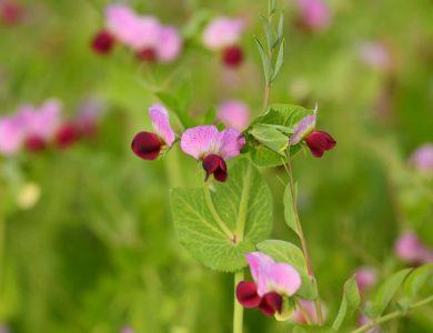 פריחת האביב צילום: מנדי הכטמן / פלאש 90