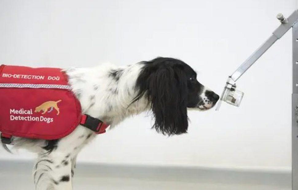 כלב שמשתתף בניסוי(צילום: U.K. Department of Health and Social Care)